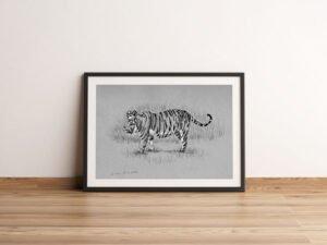 הדפס של רישום של נמרה בנגלית